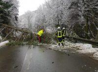 Mehrere umgestürzte Bäume mussten in Breckerfeld beseitigt werden.